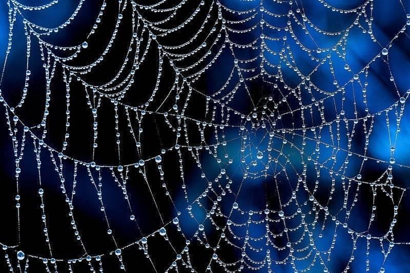 Почему паук плетет паутину. какие узлы использует паук, когда плетёт паутину? на прочность паутины влияют свет, температура и влажность