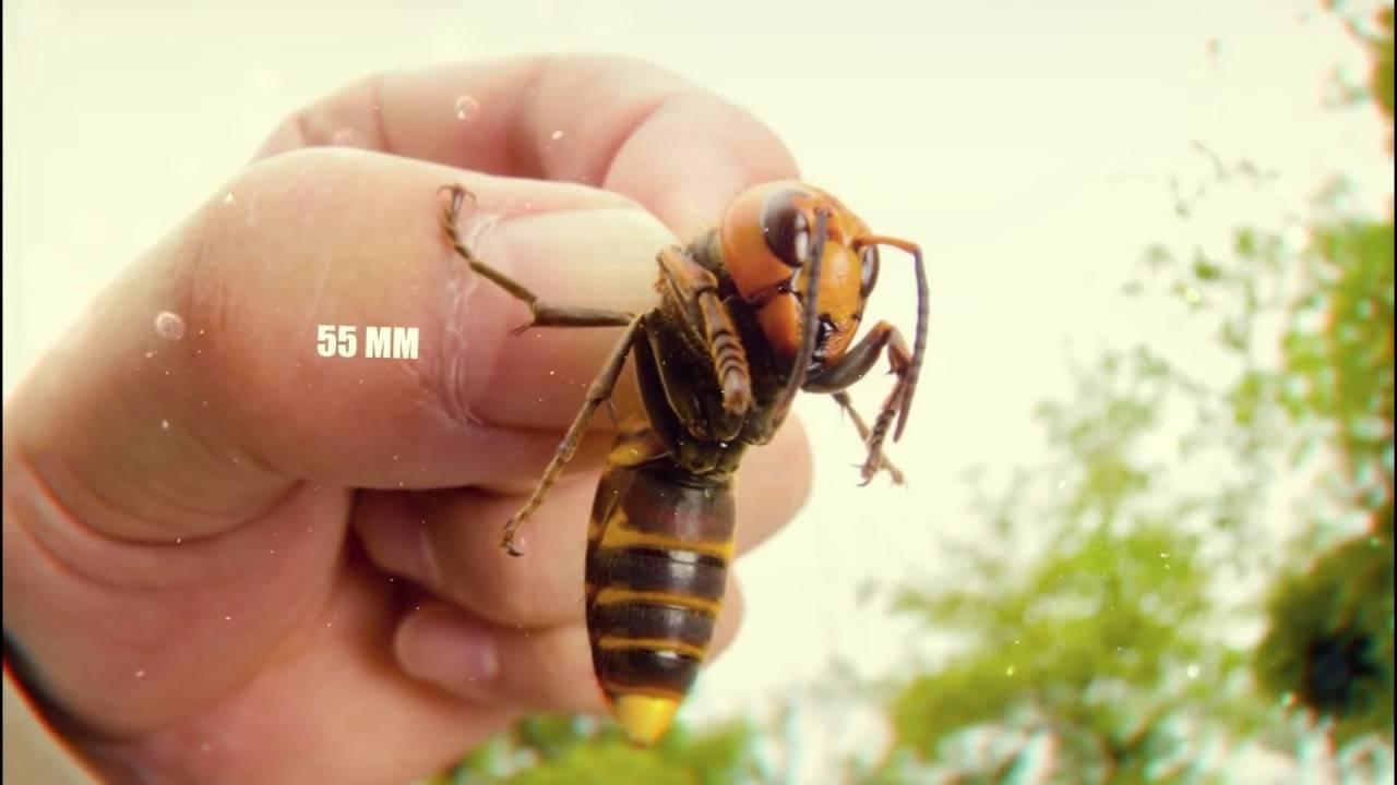 Сколько живут пчелы, и факторы влияющие на время их жизни
