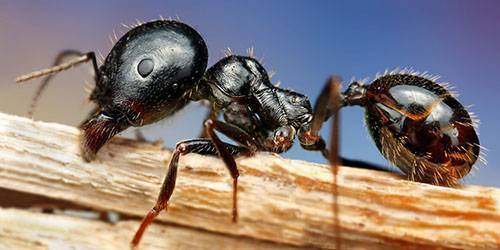 К чему снится огромный муравейник. народные поверья и современные сонники расскажут, к чему снятся муравьи