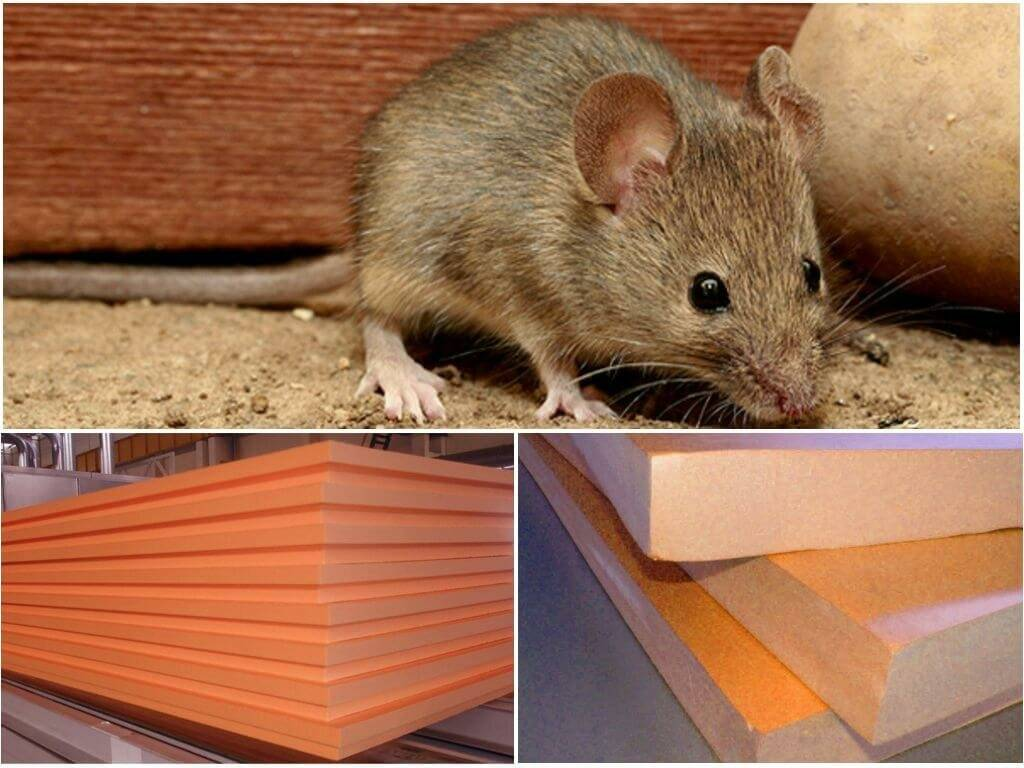 Едят ли мыши пеноплекс