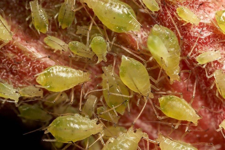 Самые распространенные вредители комнатных растений
