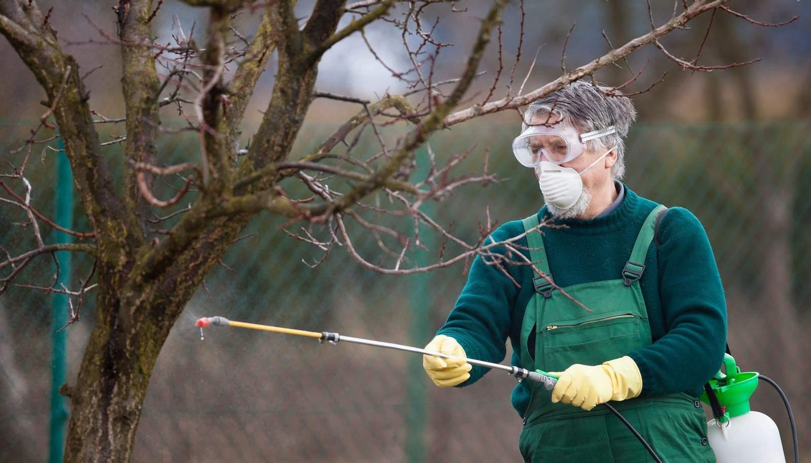 Борьба с короедом в дачном саду