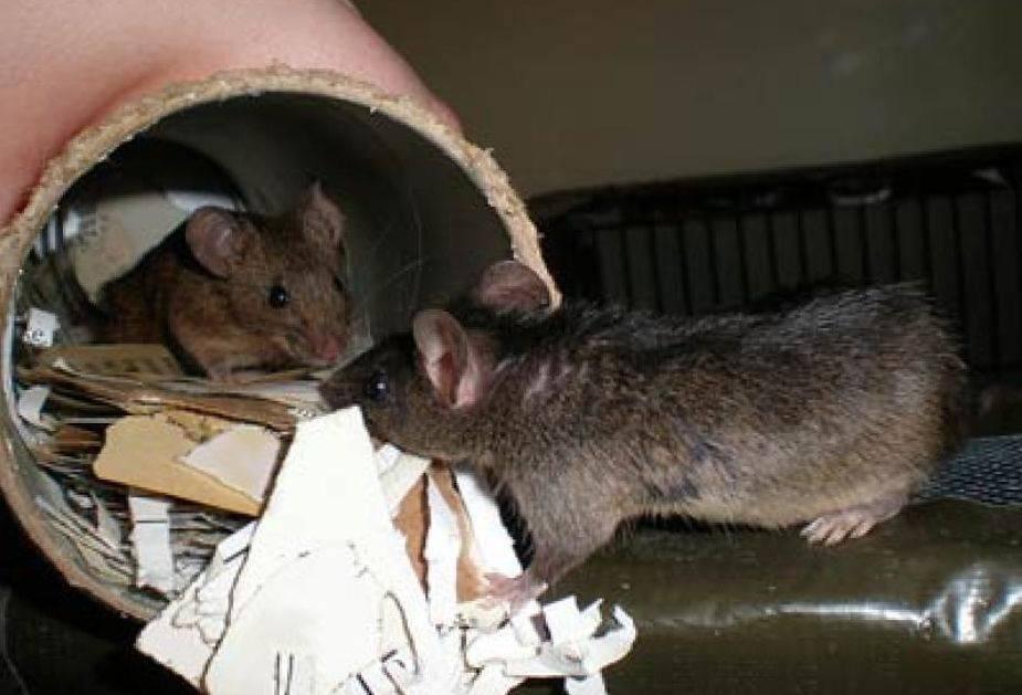 Как избавиться от грызунов на дачном участке?