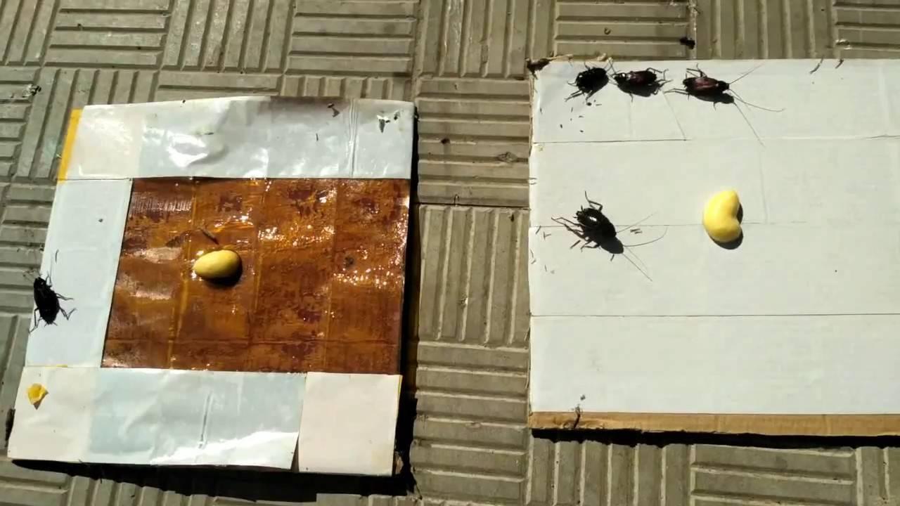 Что положить в ловушку для тараканов