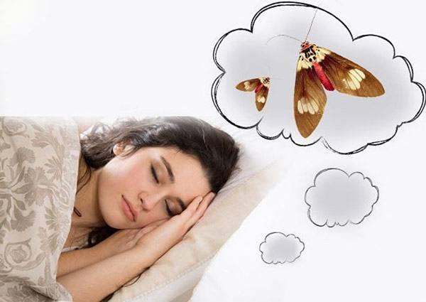 «моль к чему снится во сне? если видишь во сне моль, что значит?»