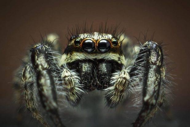 Представители паукообразных