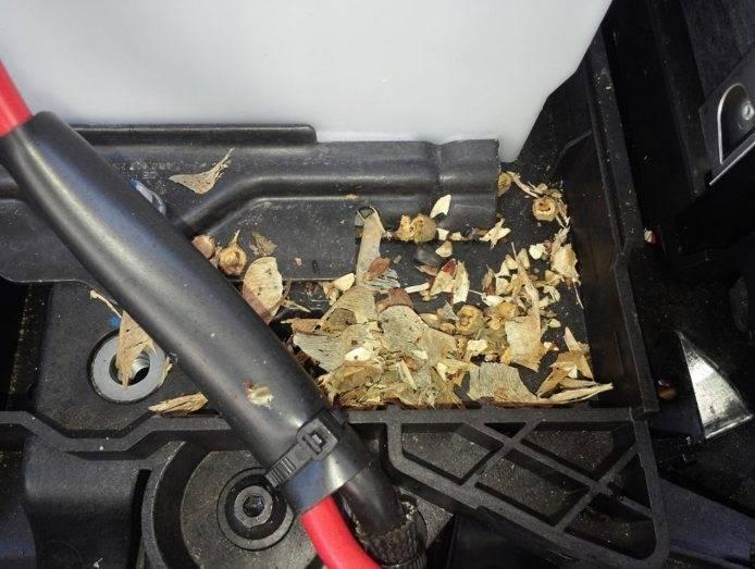 Избавиться от мышей в гараже быстро и навсегда - проверенные советы