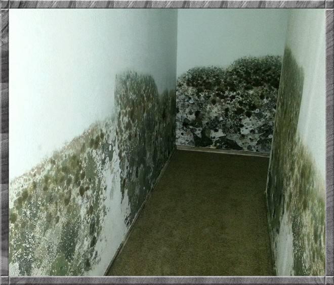 25 химических и народных средств, как быстро удалить плесень со стен в квартире и доме