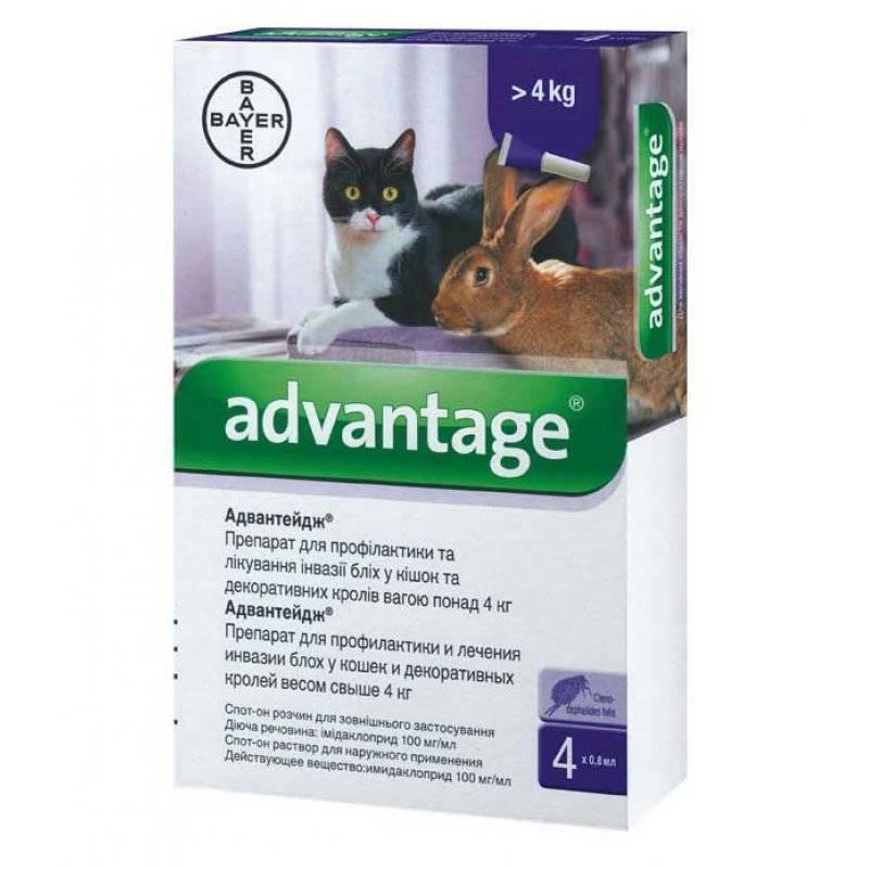 Всего капелька, но как спасает! капли от блох адвантейдж для кошек, инструкция к препарату