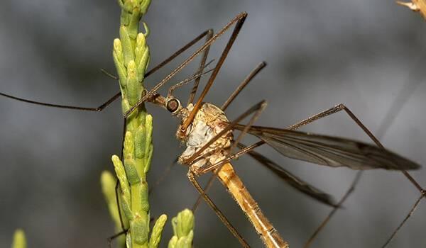 Бабочка желтушка луговая – любительница клевера и люцерны. луговая желтушка необходимые и дополнительные меры охраны