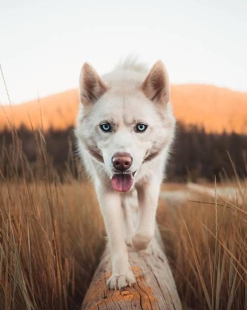 Чем помазать укусы от мошек собаке. что делать, если собаку покусали комары и мошки. их надо знать в лицо