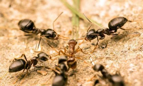 Сонник: к чему снятся муравьи во сне для мужчин и женщин