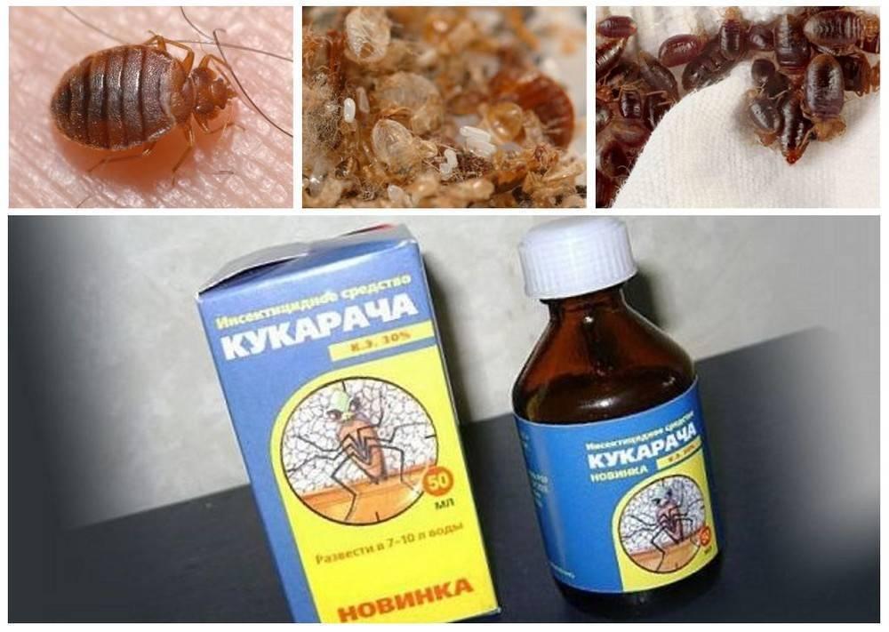Отрава от клопов: описание и названия эффективных препаратов