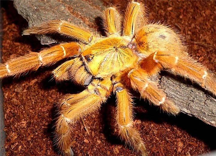 Самые красивые пауки в мире