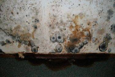 Как избавиться от белой плесени в погребе?