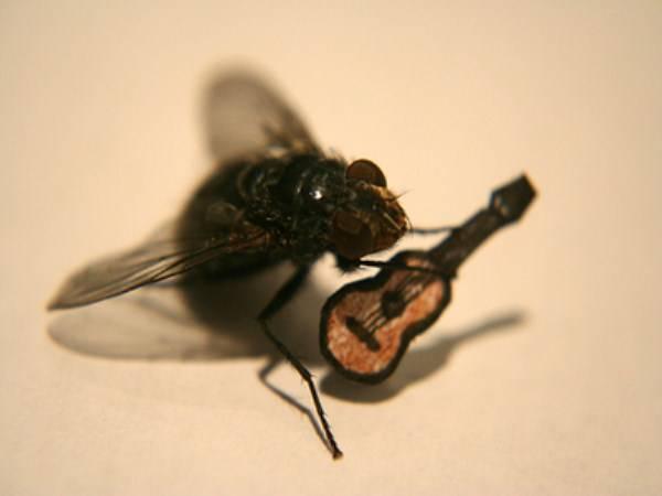 Как муха садится и держится на потолке