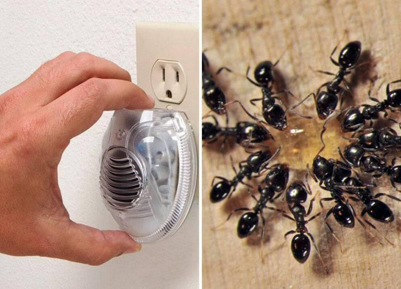 Муравьи в бане: почему там появляются эти насекомые и как от них избавиться