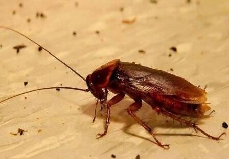 Каких запахов боятся тараканы? способы отпугивания насекомых  из квартиры при помощи различных ароматов