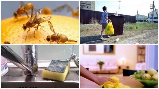 Эффективные средства и ловушки для избавления от мошек в доме и квартире