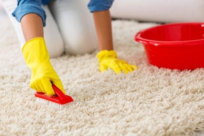 Как быстро избавиться от блох в домашних условиях?
