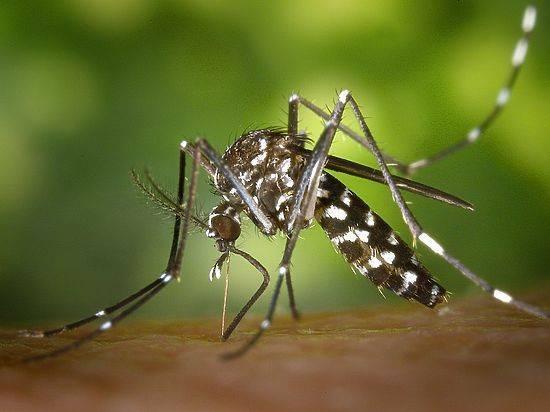 Комары и мошки – как спастись на природе и дома. народные средства для детей и взрослых из трав и масел