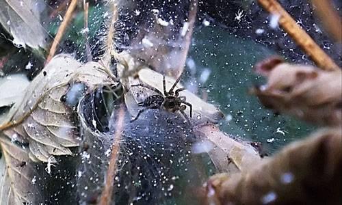 К чему снятся пауки: подробные объяснения различных снов