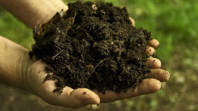 5 почвенных вредителей, которые лишают вас урожая картофеля и корнеплодов