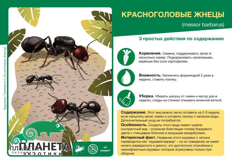 Что делают муравьи зимой — могут ли они зимовать