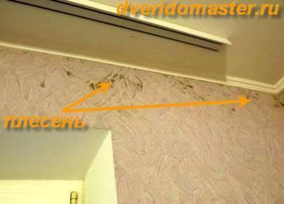 Плесень на стенах в квартире – как избавиться в домашних условиях