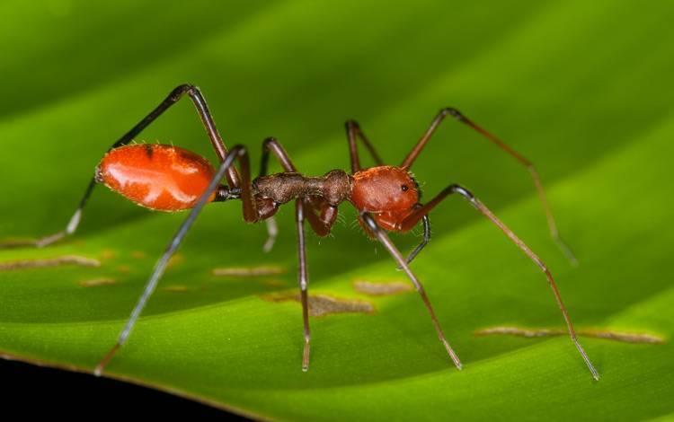 Самые опасные пауки в россии