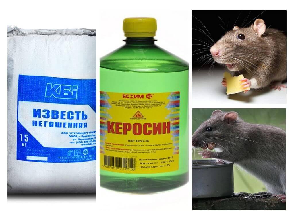 Как избавиться от крыс в сарае