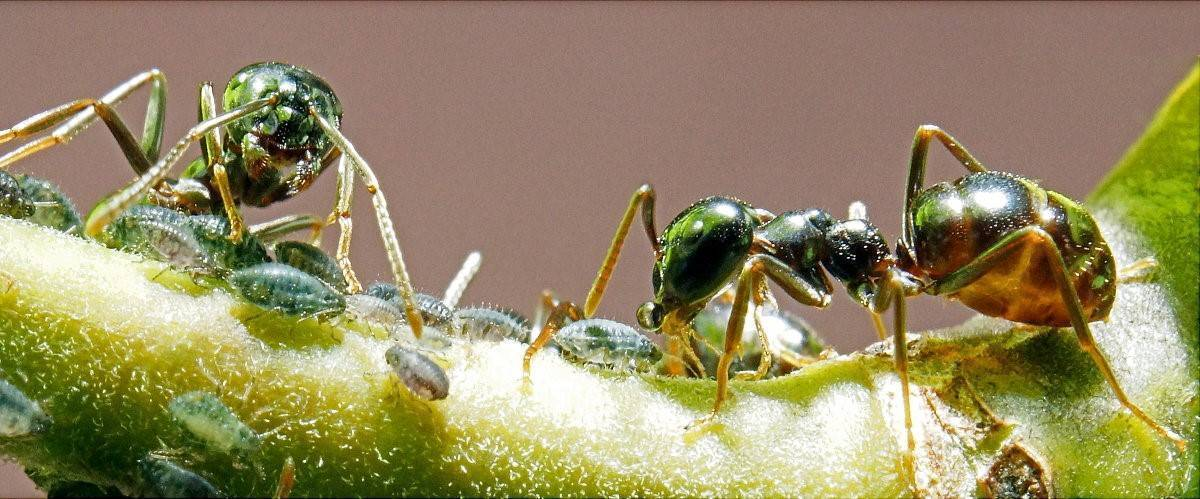 Избавляемся от муравьев в квартире