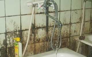 Эффективные способы борьбы с плесенью (грибком) в ванной комнате