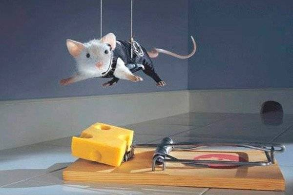 Как избавиться от мышей в погребе навсегда народными и другими средствами?