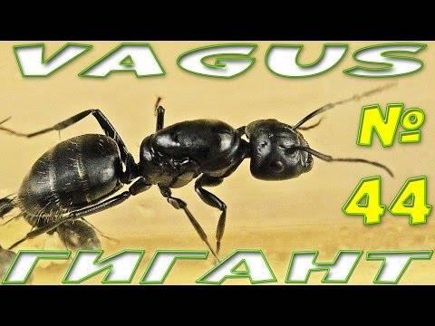 Все о муравьях