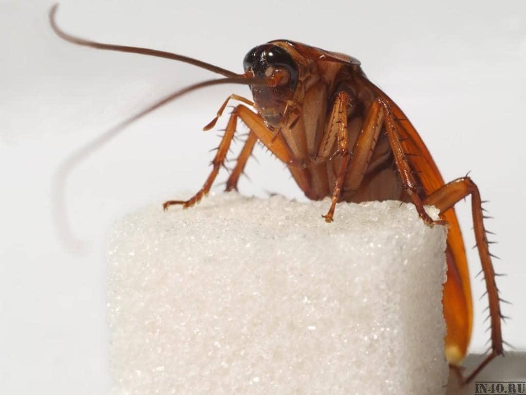 В доме тараканы: откуда и почему