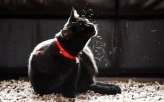 Беспокойство у кошки? возможно причина- власоед