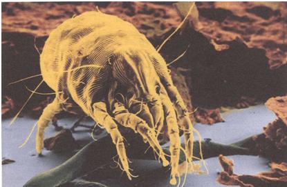 Пылевые клещи: как избавиться в домашних условиях с помощью пылесоса