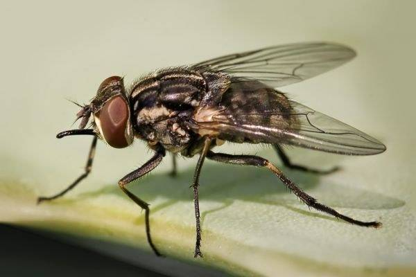 Борьба с мухами в уличном туалете