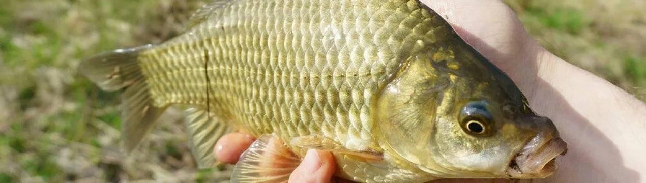 Есть ли в рыбе глисты и чем они могут быть опасны?