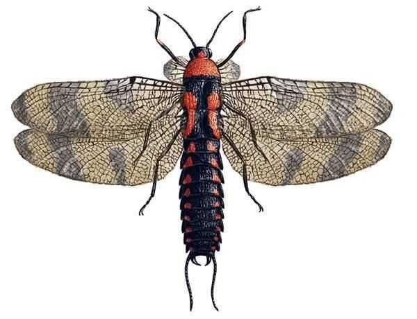 Задачи энтомологии. морфология насекомых