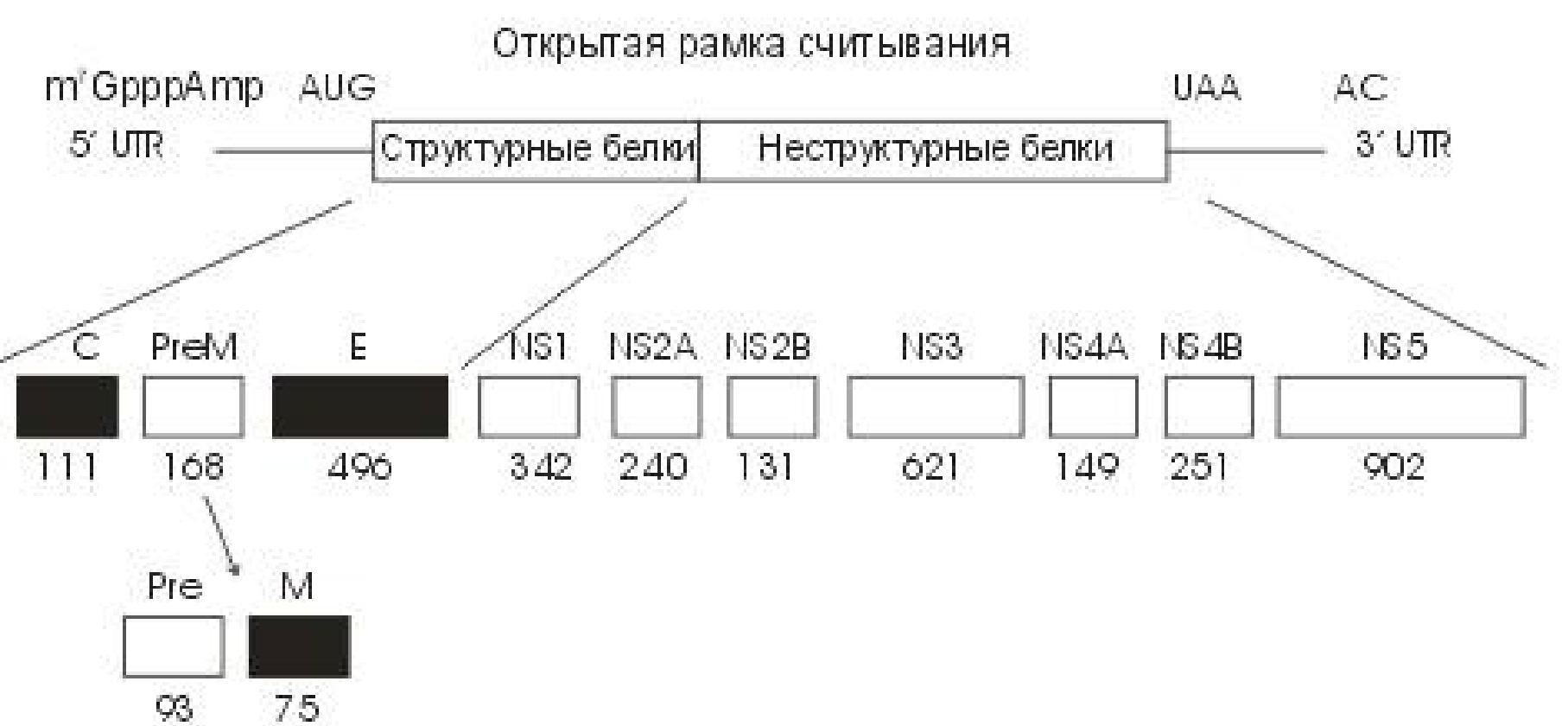 Мкб код 10 укус клеща код по мкб 10 у детей