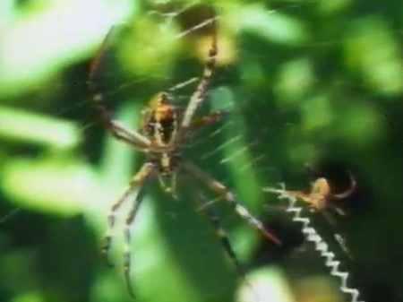 Как и для чего паук плетёт паутину