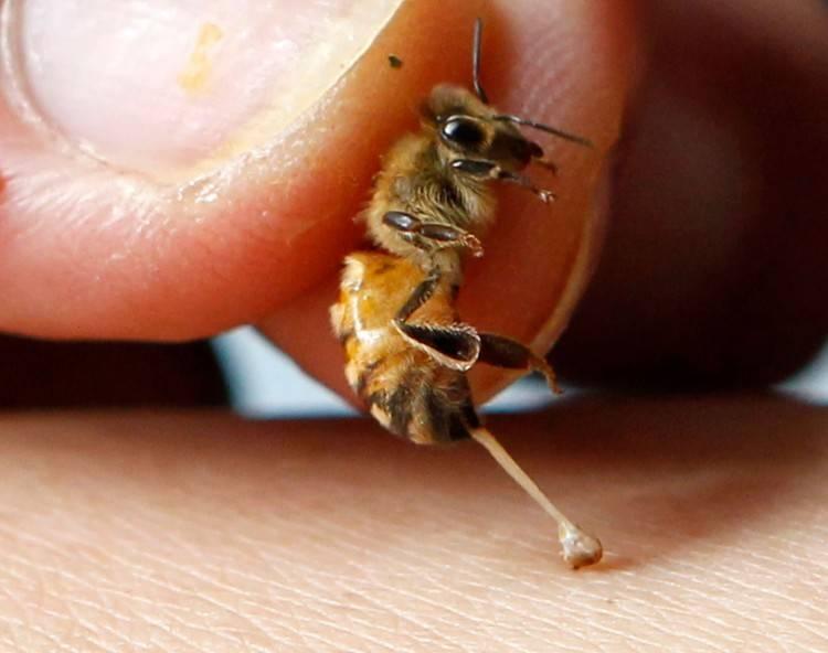 Лечение пчелами в домашних условиях