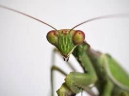 Почему мухи трут свои лапки?