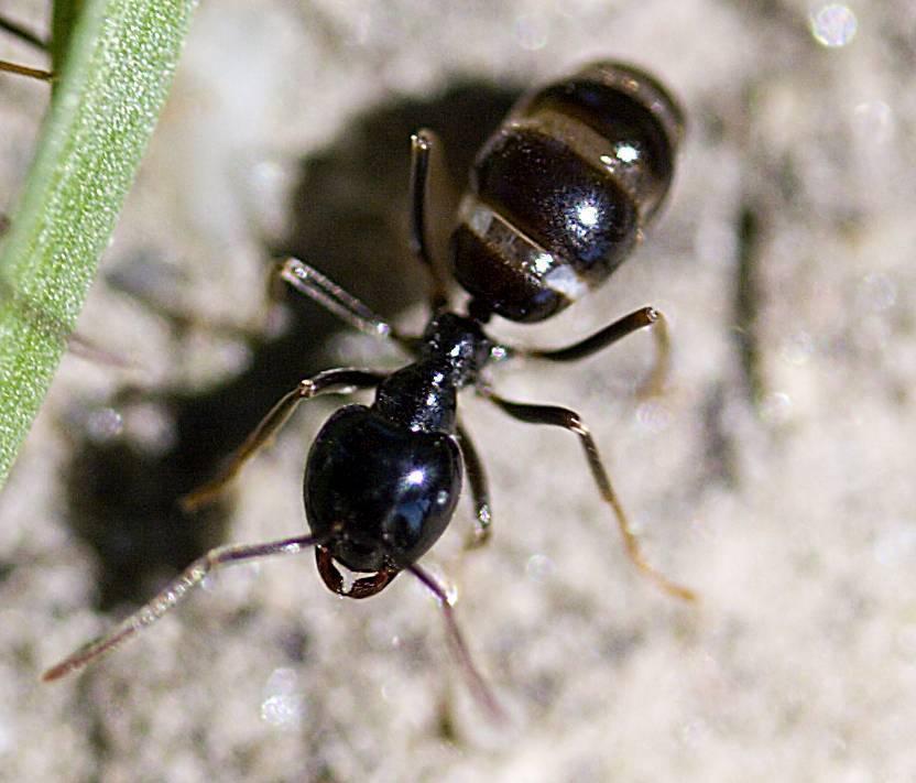Виды муравьев в россии и мире