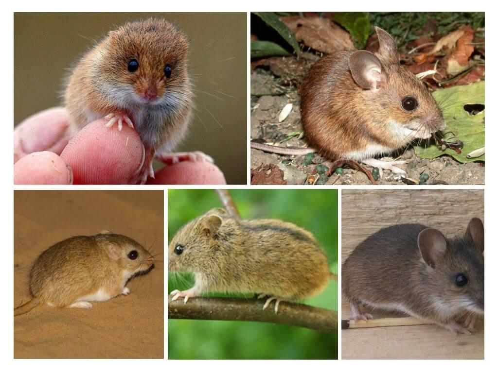 Что делать, если мыши и зайцы погрызли кору яблонь