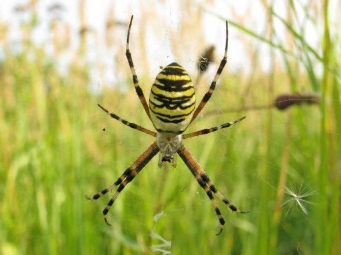 Укусил паук — что делать в домашних условиях