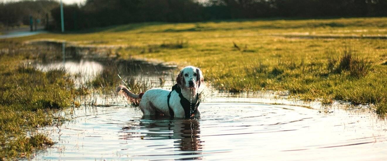 Ошейник от клещей для собак – как выбрать? топ-5 лучших
