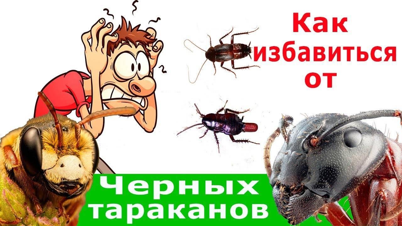Как избавиться от больших черных тараканов в квартире
